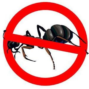 Ant Exterminator Toronto offering reliable ant control solutions.
