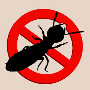 Termite control Toronto: Solutions for Toronto residents