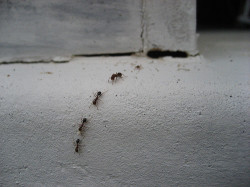 Dealing With An Ant Infestation – Pest Control Toronto