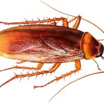 Cockroach control solutions