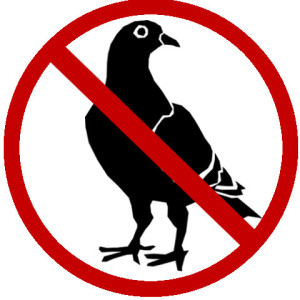 Pigeon control Toronto: Removal and control