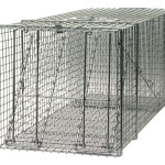 Large wire trap used for humane raccoon trapping.