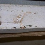 Termite signs on wooden surface.