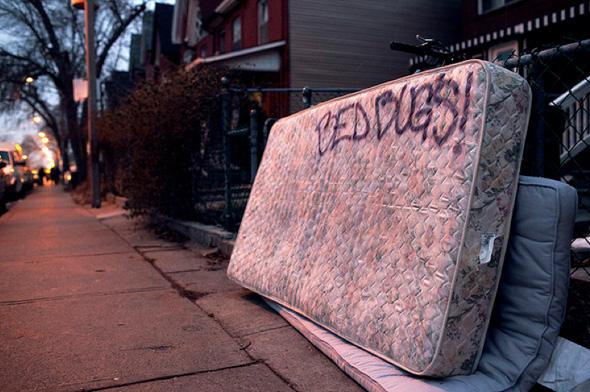 Toronto bed bug problem.