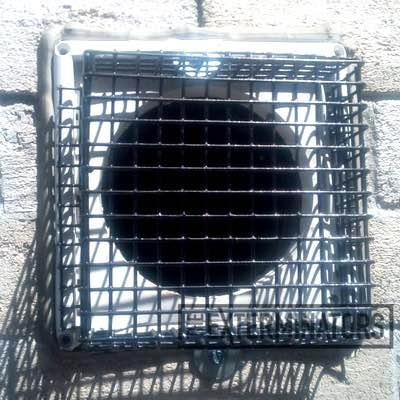 mouse-exclusion Pest Control Toronto